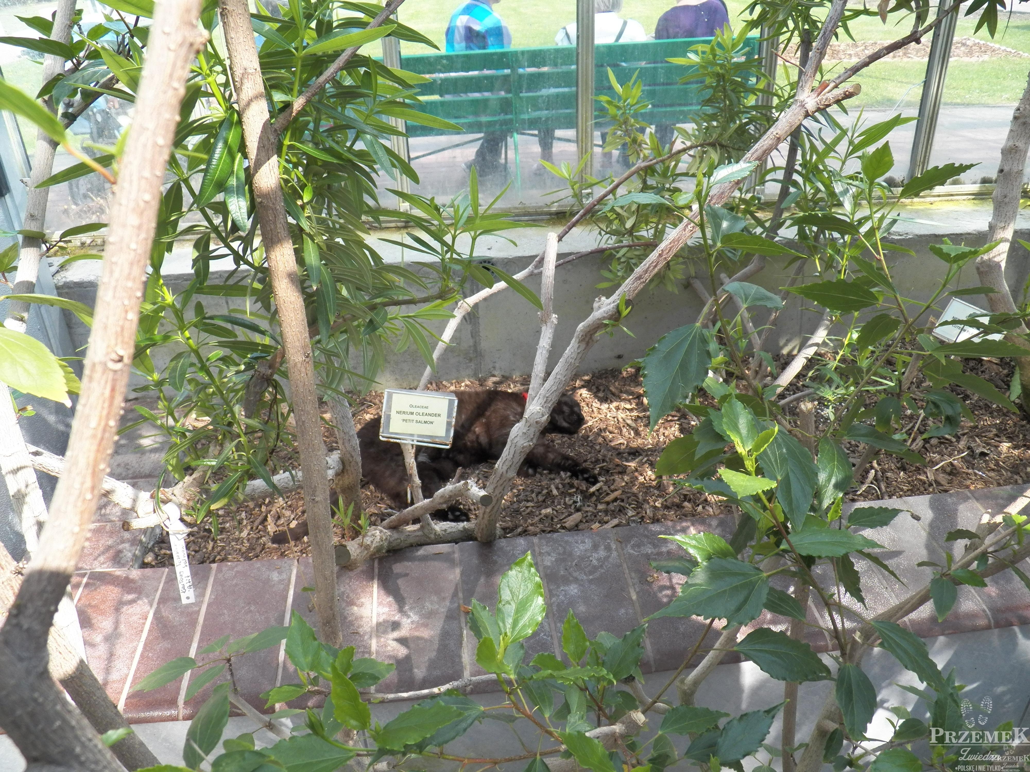 kot ogród botaniczny