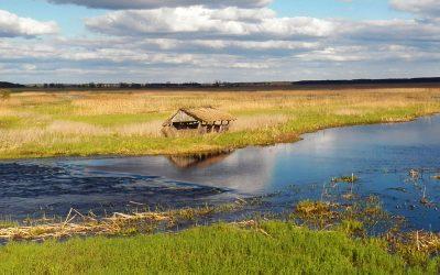 Narwiański Park Narodowy – Kładka Waniewo – Śliwno