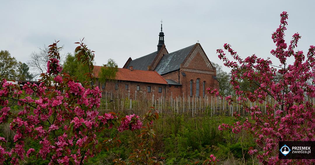 Kościół św. Jakuba i plantacja winorośli Sandomierz