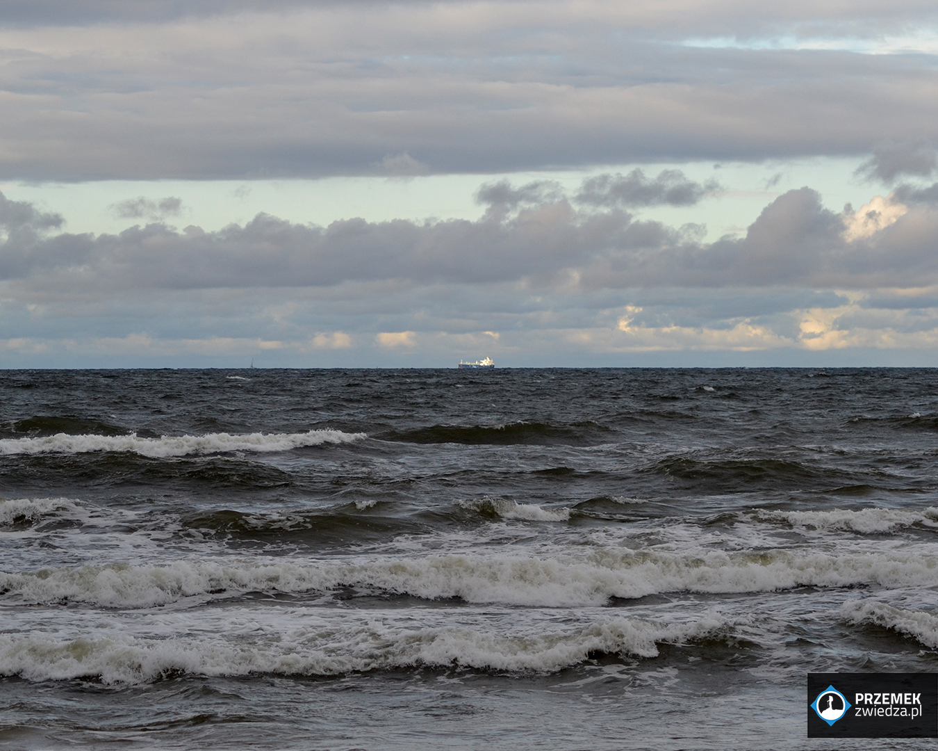 morze statek bałtyk biegus rdzawy