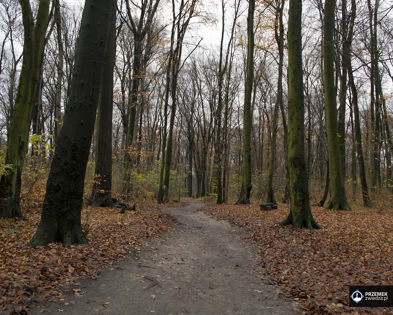 Las Wolski Ogród zoologiczny w Krakowie