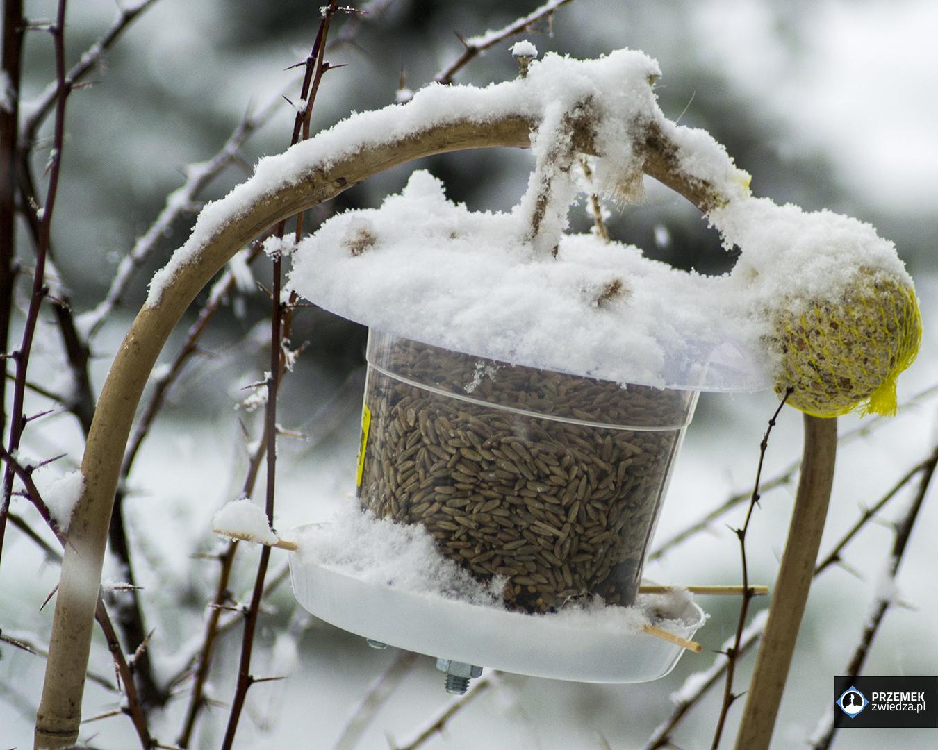Karmnik DIY dla ptaków bogatka