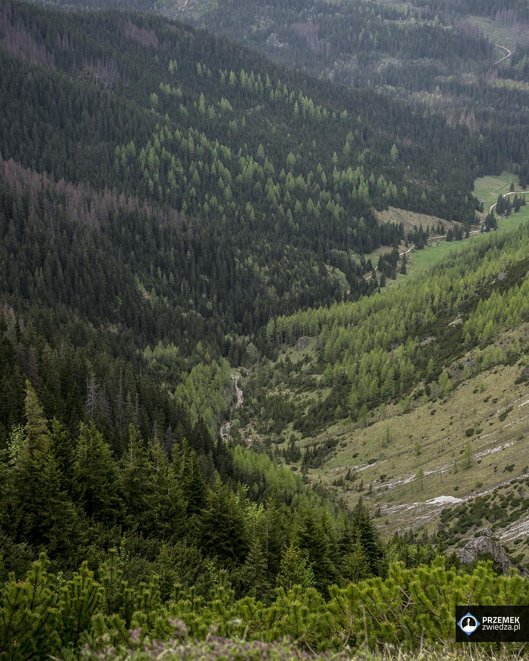 dolina jaworzynka hala gąsienicowa